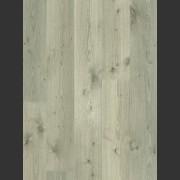 Noble Oak