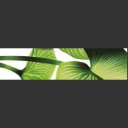 Lotus-B-MHY40-B